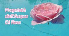 La rosa possiede molti benefici per la nostra salute, a partire dalle sue proprietà terapeutiche. [Leggi Tutto...]