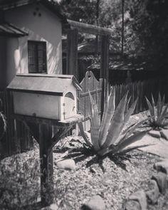 Street side scene #Ojai #garden #blackandwhite #nature #outdoors #landscape #design #landscapedesign
