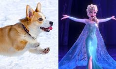 12 Perfectly Matched Corgis and Disney Royals