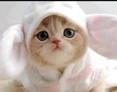 Meow bunny is just so #cute #kittens