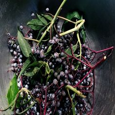 Elderberry Tonic for Cold and Flu Prevention - Real Food - MOTHER EARTH NEWS