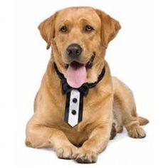 Luxe zwart/witte dasstrik voor honden