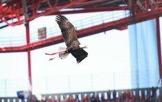 Sou Benfica