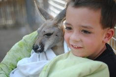 Gulf Shores Alabama is a great vacation spot for families! Complete with zoo where you can pay $5 to play with baby kangaroos.
