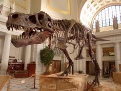 We got to know Sue, the largest Tyrannosaurus Rex ever found, who is now at The Field Museum of Chicago. Read the secrets of Sue.
