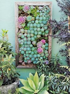 Amazing colors!! Vertical Gardening Ideas - How To Make a Vertical Garden - @CountryLiving