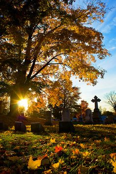 I took a few autumn shots at Greenwood Cemetery in my hometown. If you like this, you might enjoy my Autumn Set. My Latest , Best Recent Photos, Most Interesting, Best and Random Sets. Greenwood Cemetery, Memorial Park, Place Of Worship, Spiritual Inspiration, Tree Of Life, Vermont, Gardens, Autumn, Dreams