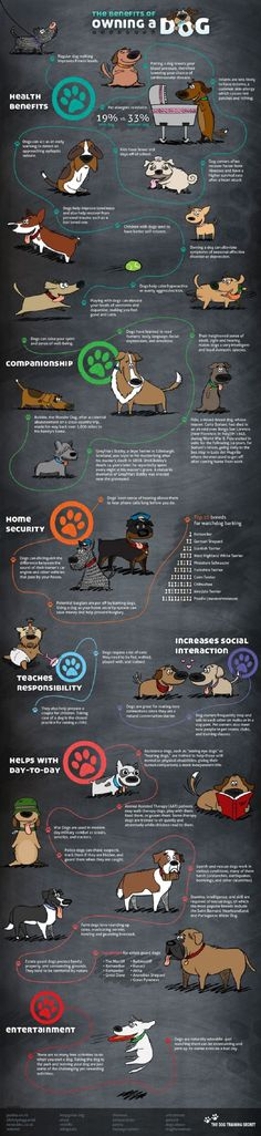 38 Benefits of Owning A Dog  - You cannot miss this if you are a pet lover