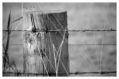 Barbed wire fence Alresford - null