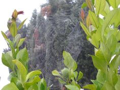 Web with Dew by DebraJeans on Etsy