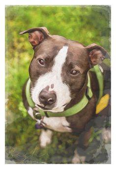 Sassaroo. #pitbull #dogparkpublishing www.dogparkpublishing.com www.facebook.com/ittypitties