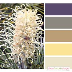 Bee Color Swatch