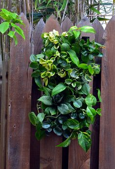 This is a Living Wall kit featuring 2 ELT EasyGreen panels covered with tropical plants. Offered by The Living Wall Co. Tropical Plants, Small Living, Interior And Exterior, Fence, Green Walls, Miniature, Kit, Small Space Living, Mini Things