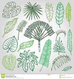Tropical palm leaves,branches set.Outline,Green