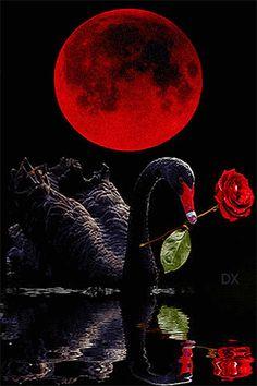 Чёрный лебедь с розой - анимация на телефон №1372586