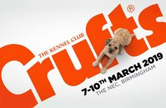 How to write a press release or a pitch to a journalist if your dog has competed at Crufts. Worlds Largest Dog, Writing A Press Release, Feel Good Stories, Puppy Care, Cute Dogs And Puppies, Old Dogs, Dog Show, Jack Russell Terrier, Happy Dogs