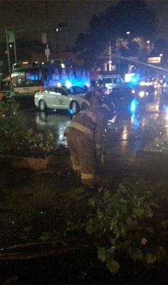Lluvia tira árbol sobre un automóvil en Eje Central