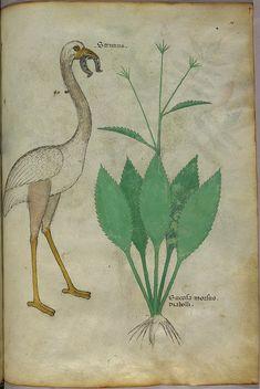 Tractatus de Herbis (1440)