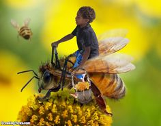 Boy Collecting Honey on a Bee