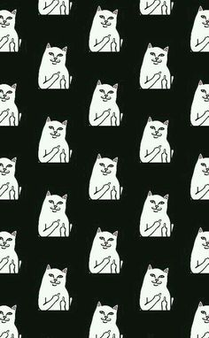 #CatsRFun