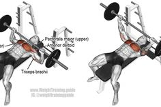 Barbell bench press exercise illustration #benchpressweighttraining