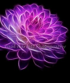 Fine Art Photograhpy Fractal Dahlia 20 x 24  Fine by PhotoCatcher, $60.00
