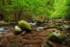 Photograph The Great Smoky Mountains National Park by Lauren Bauer on Great Smoky Mountains, Lush, Golf Courses, National Parks, Photograph, Pictures, Fotografie, Photography, Resim