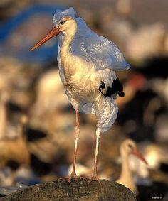 No ha inventado una moda....  ...es el resultado de la basura en el mar...  ...esto lo dejan los que asisten a las playas y no les importa ser culpables de ese mal comportamiento...