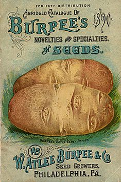 Company Name:  W. Atlee Burpee & Co.    Catalog Title:  Abridged Catalogue of Burpee's Novelties and Specialties in Seeds (1890)  Publication Information:  Philadephia, PA  United States  Smithsonian Institution Libraries Catalog Number:  09537