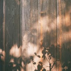 Leaf Shadows on a Cabin Wall