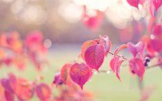 otoño rosa - Buscar con Google