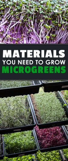 Interested in growing microgreens? Figure out what microgreens supplies you need to get started. Don't worry...it's VERY cheap and VERY fun to do!