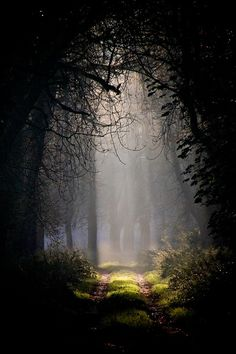 forest, nature, and tree image Beautiful World, Beautiful Places, Beautiful Forest, Beautiful Scenery, Beautiful Beautiful, All Nature, Belle Photo, Land Scape, Enchanted