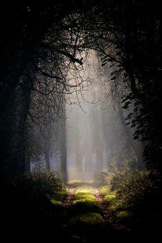 Sacred space. Dark in the woods.