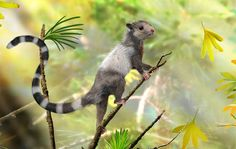 This is a reconstruction of the new mammal species, Xianshou songae. This mouse-sized animal was a tree dweller in the Jurassic forests and belonged to an extinct group of Mesozoic mammals called Euharamiyida.
