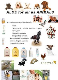 🐶🐺🐎 Love & Care for your animals with Aloe 🐶🐺🐎 Forever Life, Forever Young, Shop Forever, Aloe Vera Juice Drink, Aloe Berry Nectar, Forever Freedom, Forever Living Business, Forever Living Aloe Vera, Natural Aloe Vera