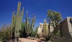 PHOENIX: Desert Botanical Garden $18. per person. Open 8am -8pm