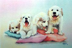 Cadells (aquarel·la) Cachorros (acuarela) Puppies (watercolour)