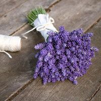 Fresh lavender bouquet from our little lavender field. (July 2016)