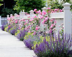 Beautiful Russian Sage Garden Patio Exterior