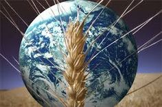 essay on food security in india GMOs and Global Food Security Global Food Security, Economic Problems, Jesus Is Coming, Food System, World Problems, Food Science, Organic Farming, The Only Way, Genetics