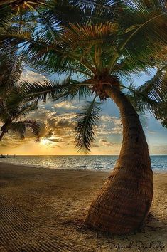 Cool Pictures, Beautiful Pictures, Beach Wallpaper, Tropical Beaches, Photo Tree, Beach Scenes, Landscape Photos, Dream Vacations, Beautiful Beaches