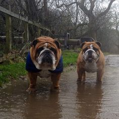 Muddy puddle = The boys are in it  #Padgram
