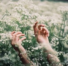 gambar flowers, hands, and nature Adam Parrish, Claire Fraser, Anne Of Green Gables, Mystic Messenger, Aster, Twilight, Hands, Marvel, In This Moment