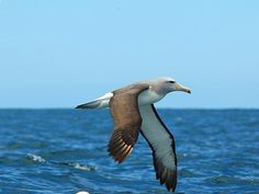 Bird flight   #GBWC #birdconservation #savebird #savelife #birdindanger #birdlife #birds