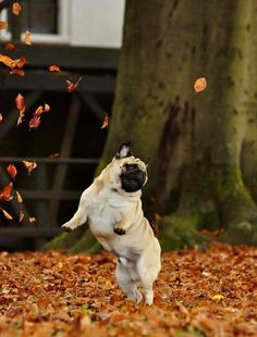 16 Animals Who Are So Excited That Autumn Is Here 8 - https://www.facebook.com/diplyofficial