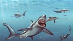 A NEWLY discovered prehistoric shark species which grew to about the size of a car is believed to have patrolled the ocean around 20 million years ago.