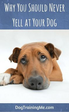 Never yell at your dog. We take a look at some very good reasons why you shouldnt yell at your dog. We also give you some suggestions on what you can do instead of yelling to get through to your dog. Check out our article now. Dog Training Techniques, Dog Training Tips, Potty Training, Agility Training, Dog Agility, Leiden, Dog Care Tips, Pet Care, Puppy Care