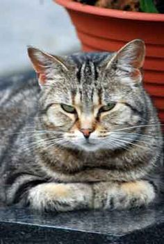 Die Katzen von Montmartre