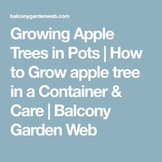 Growing Apple Trees in Pots | How to Grow apple tree in a Container & Care | Balcony Garden Web